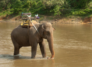 Description: Elephant standing in River